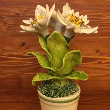 Vaso con Fiore Stella Alpina